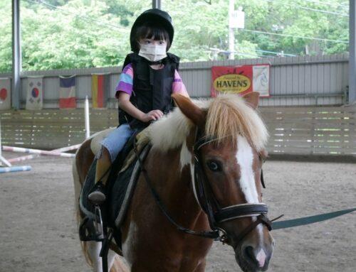 【大日馬術文創園區】新埔鄰近竹北馬場推薦,親子英式馬術課程體驗,帶孩子認識馬兒、刷毛、互動、餵食
